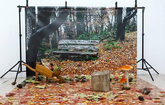 fondo fotografía de otoño